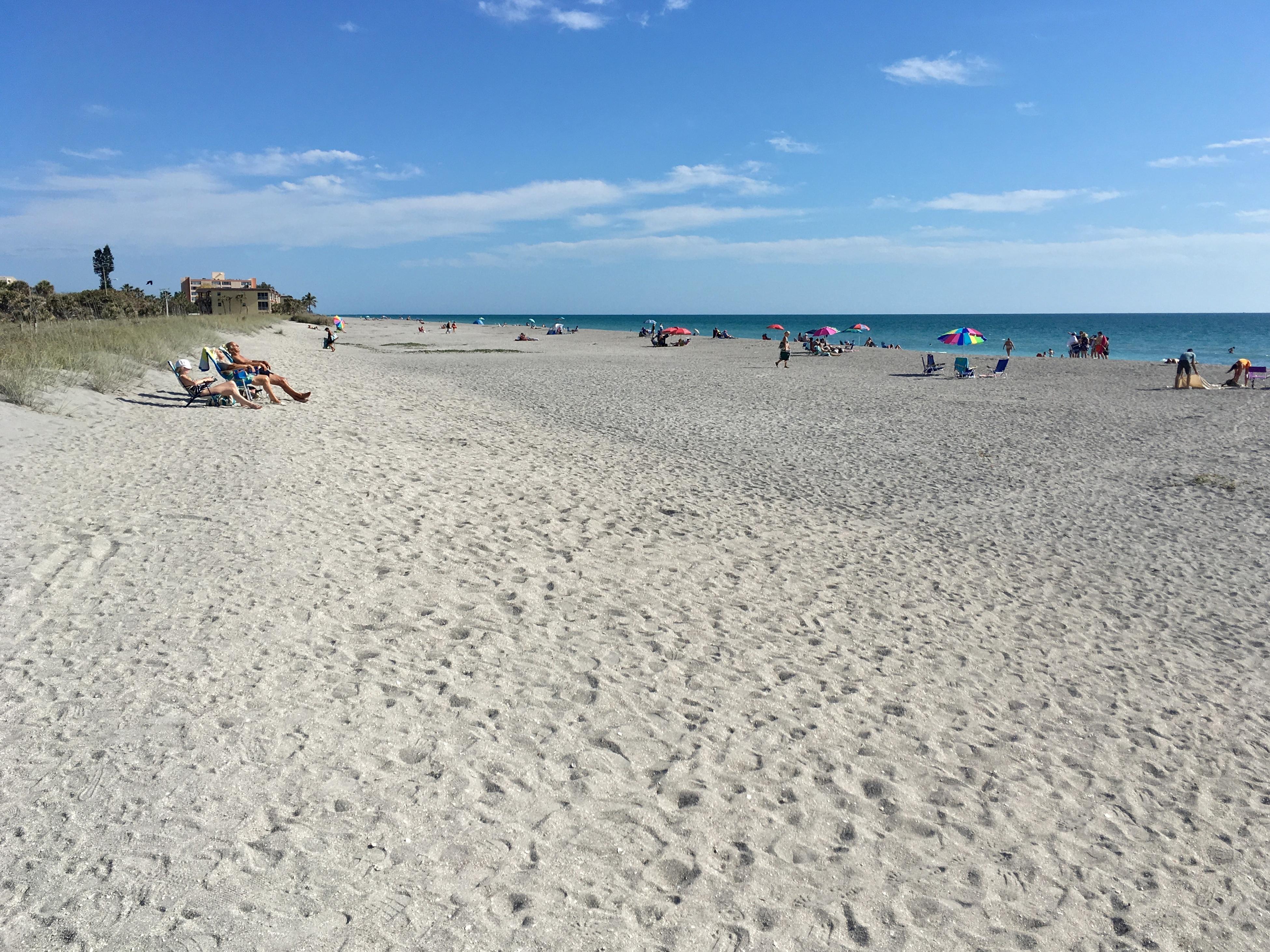 Turtle Beach On Siesta Key Sea Shell